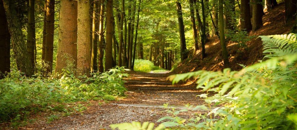 Wanderweg durch den Wald in Deggendorf
