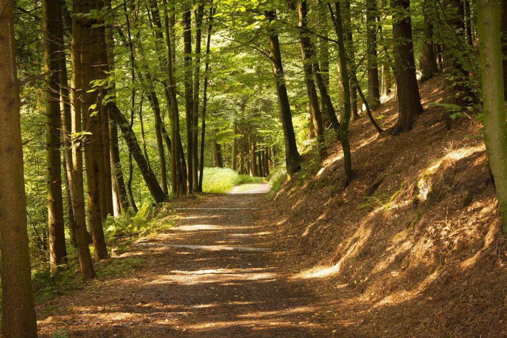 Waldweg in Deggendorf