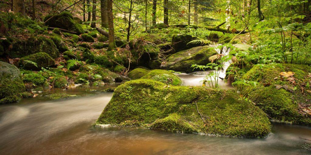 Wasserfaelle im Waldstück der Saulochschlucht in Deggendorf