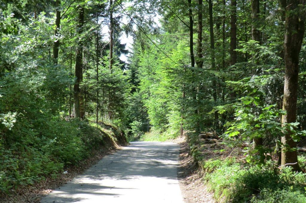 Rundwanderweg Leoprechtstein