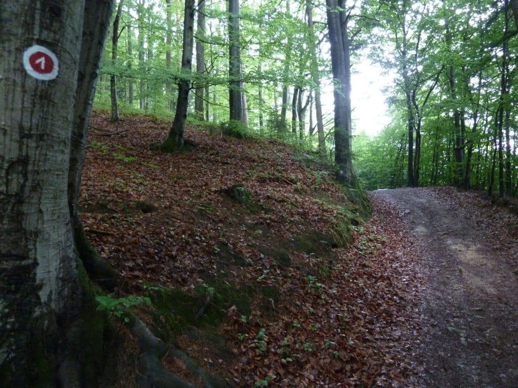 Rundwanderweg Mühlbogen